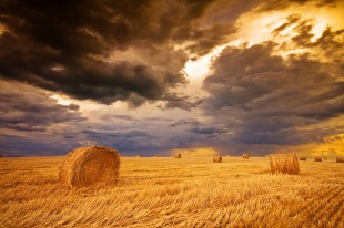 field with hay bale